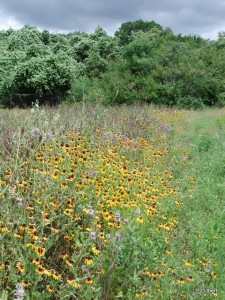 BFL meadow & woodland habitats Larry Gilbert photo